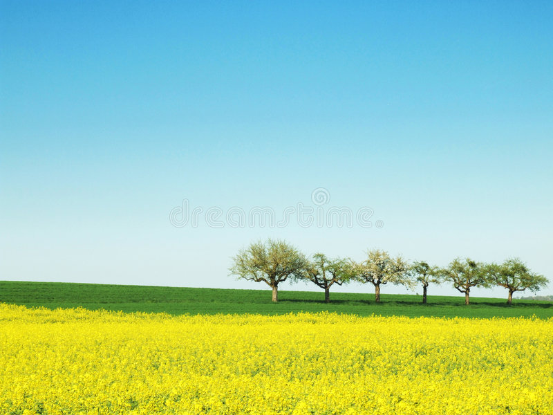 Download Spring with Trees stock photo. Image of farm, tree, copyspace - 5175672