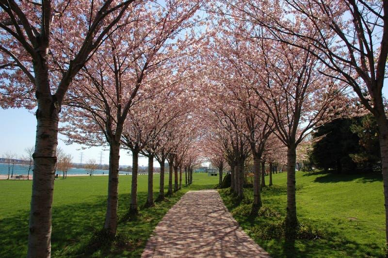 Spring Trees stock photo