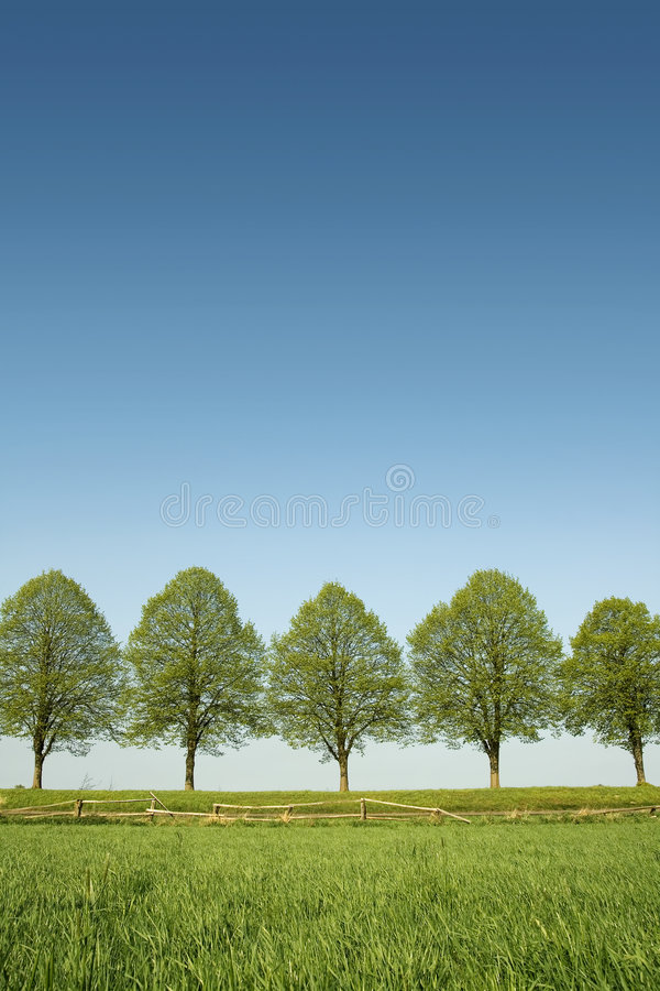 Download Spring trees stock photo. Image of green, trees, tree - 9050770