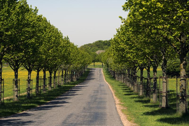 A young avenue a sunny day in Denmark royalty free stock image