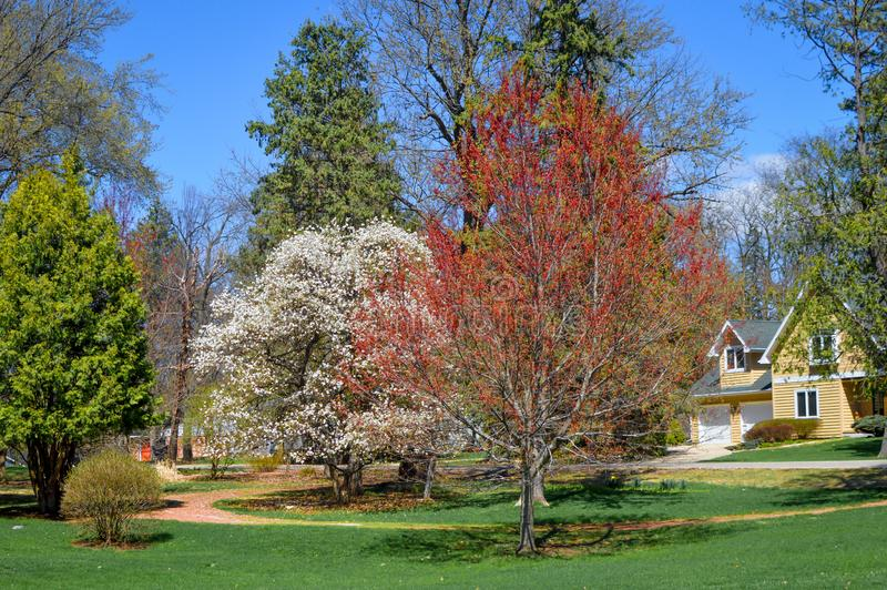 Spring Trees Blossoming in a Residential Area royalty free stock photo
