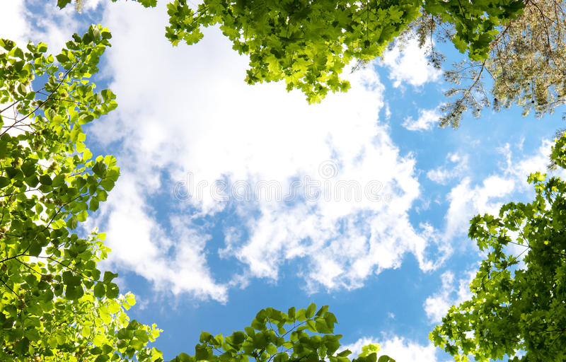 Spring trees and blue sky. stock photos