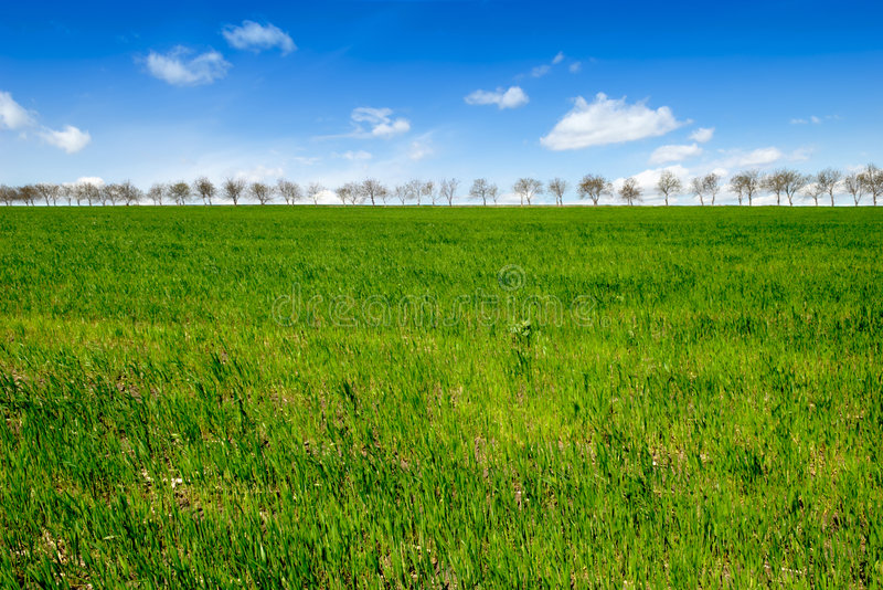 Spring trees in line. On horizon stock photography