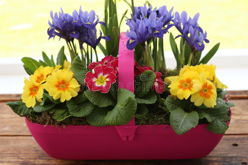 Spring Trug royalty free stock photos