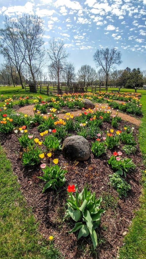 Spring Tulip Bulb Flower Garden - Beckman Mill County Park, Beloit, WI stock photos