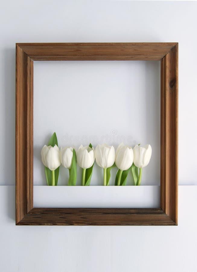 Spring tulip frame vector illustration
