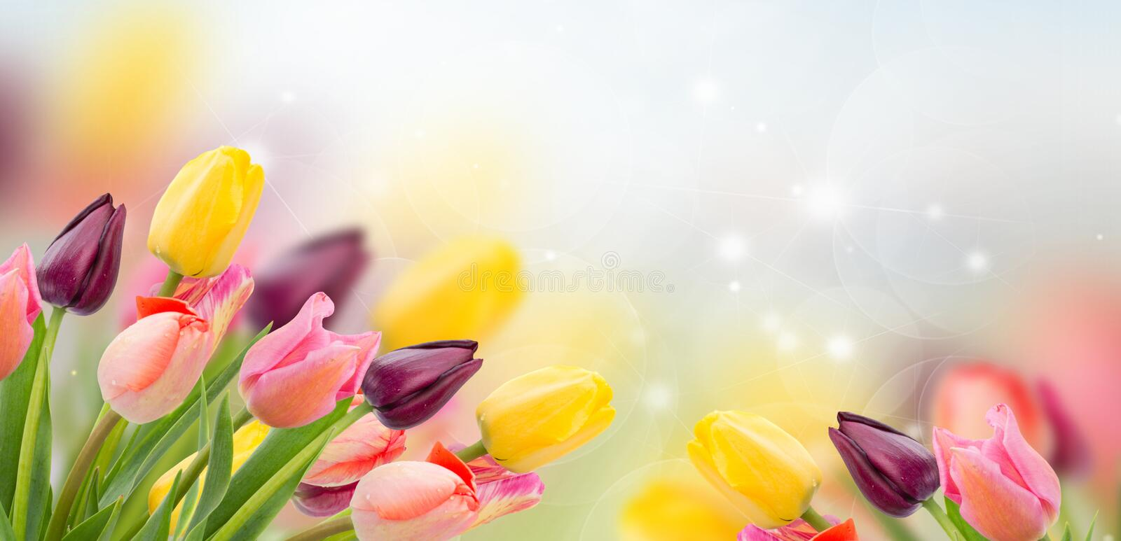 Spring tulips on blue. Spring multicolored tulips on blue bokeh background banner stock photo
