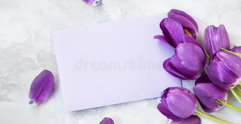 Spring tulips bouquet with card label , women`s or mother`s day holiday greeting with copy space label card, beautiful spring. Holidays card with purple tulips royalty free stock image