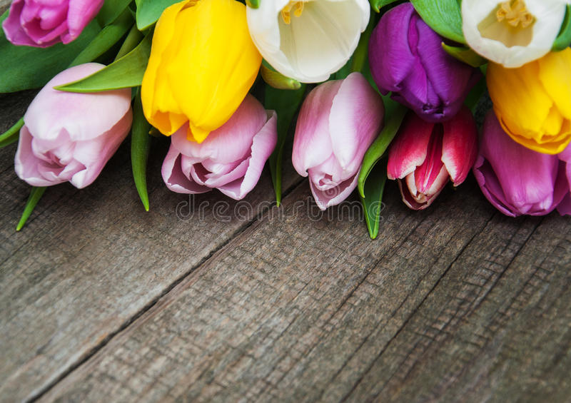 Spring tulips flowers. On a old wooden background royalty free stock photo