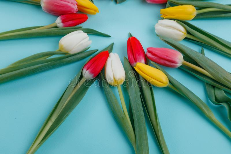 Spring tulips frame on background, top view. royalty free stock image