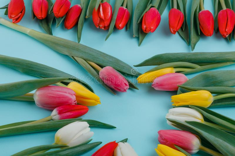 Spring tulips frame on background, top view. stock photos