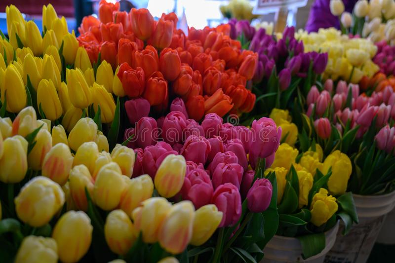 Spring Tulips at Pike Place Market Seattle Wa. Rows of fresh cut flowers ready for sale. Photo taken at Seattle Washington`s Pike Place Market royalty free stock image
