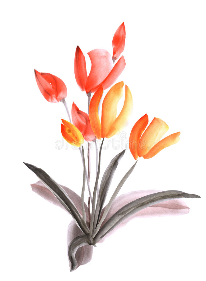 Spring tulips with orange and red flowers on a white background. Isolated. Watercolor royalty free stock photography