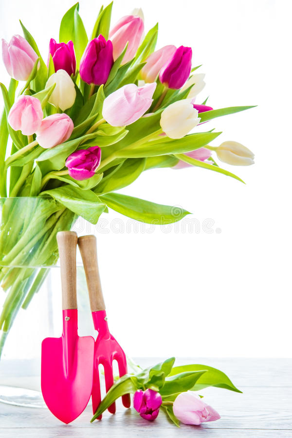 Spring tulips in vase. And garden tools stock photo
