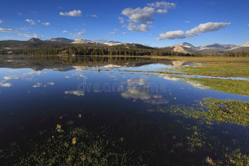 Spring at Tuolumne Meadows in Yosemite stock images