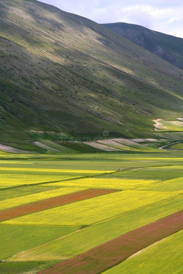 /spring van Castelluccio landschap stock afbeeldingen