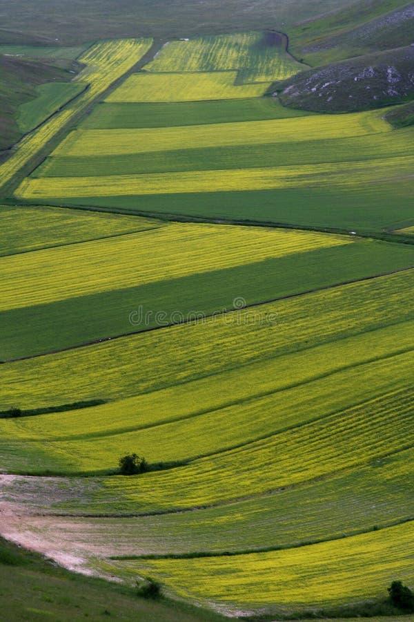 /spring van Castelluccio landschap stock fotografie
