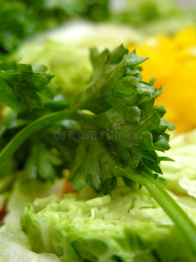 Spring vegetables royalty free stock photo