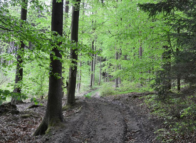 Spring view of forest road, south Bohemia stock image
