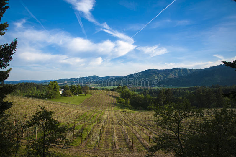 Spring vineyards, Willamette Valley, Oregon royalty free stock photography
