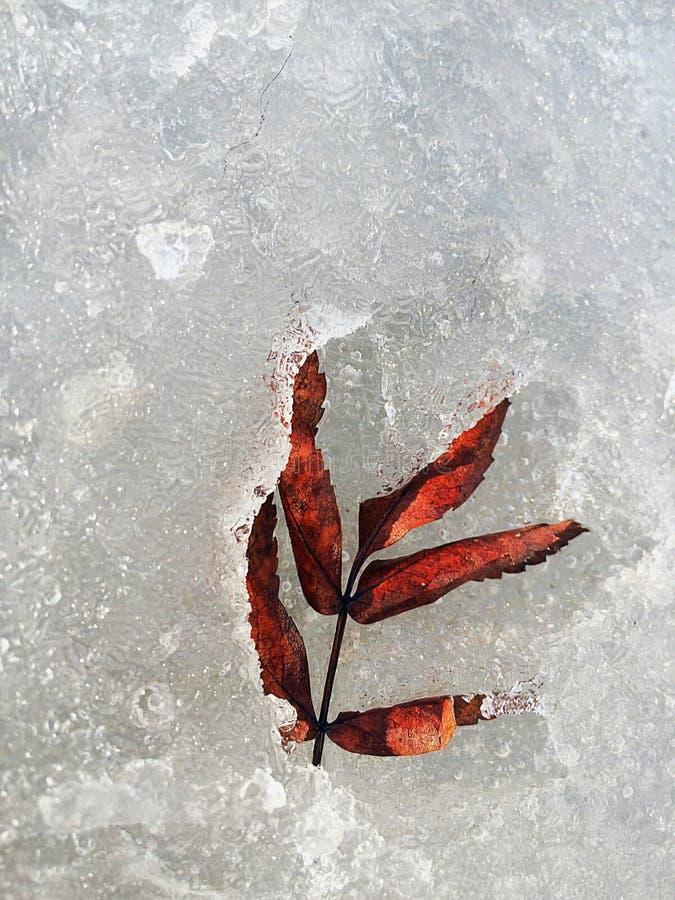 Spring vs Winter stock photo