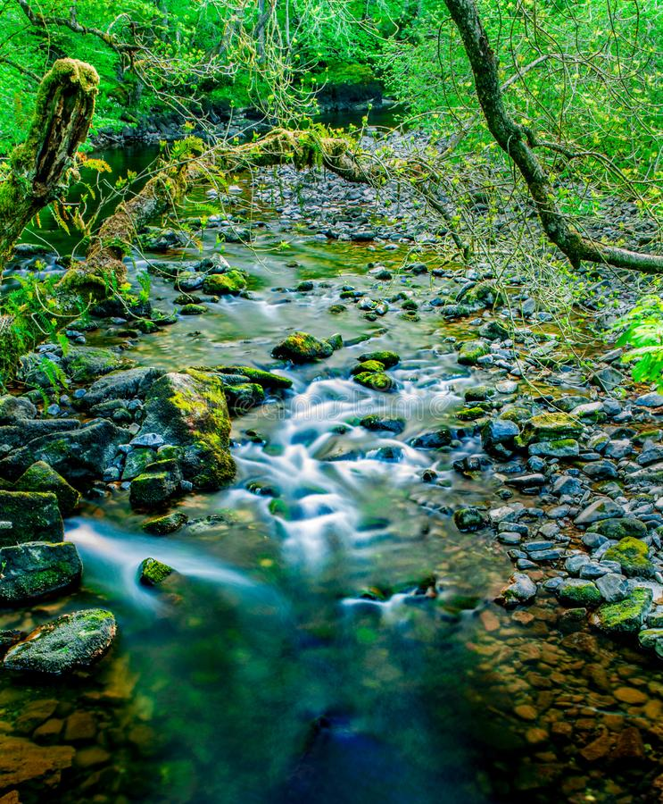 Spring Water through lush green forest stock photography