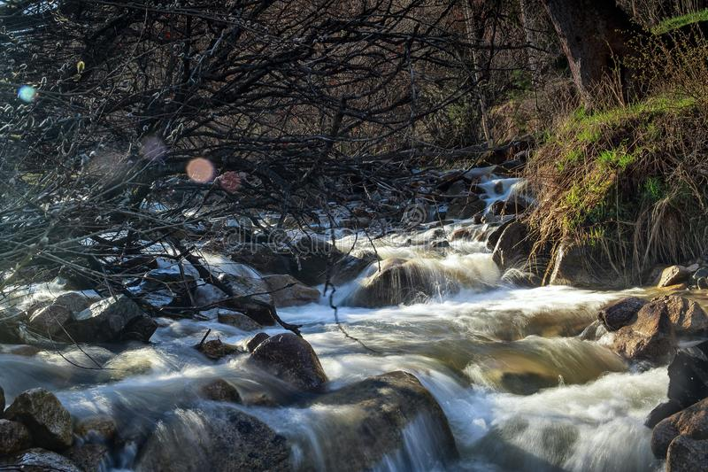 Spring waters. River stream in the mountains in spring royalty free stock photography
