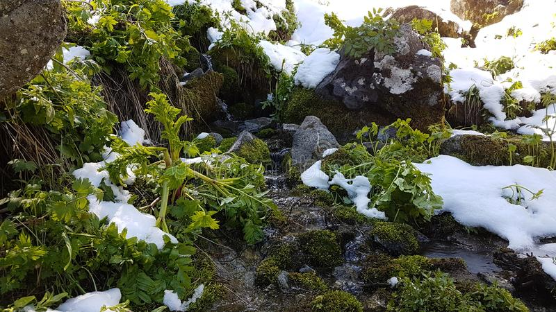 Spring waters. The snow melts, flowing streams in spring royalty free stock photography