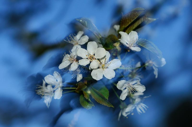 Spring whirl royalty free stock images