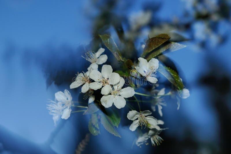 Spring whirlwind stock photos