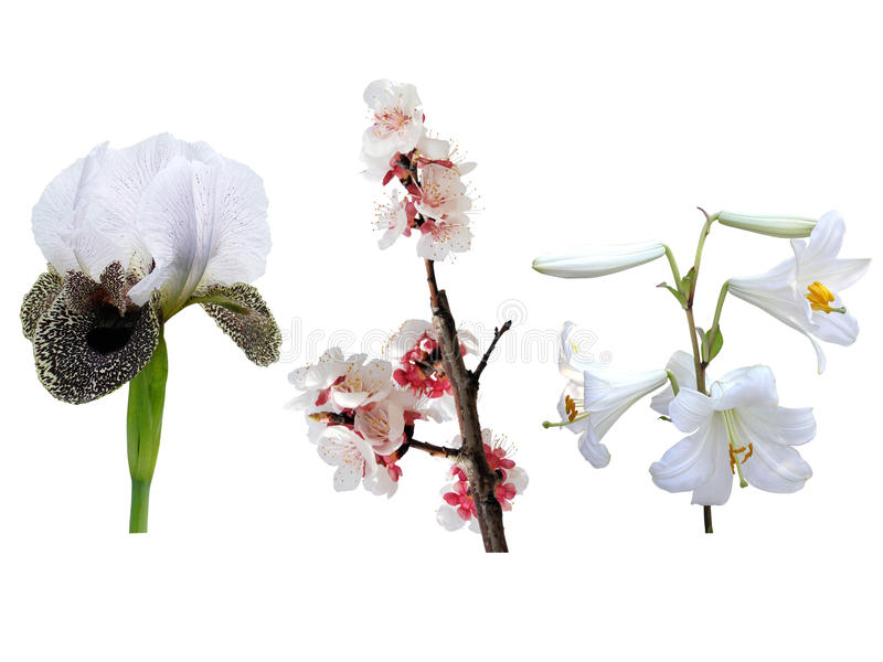 Spring white flowers stock photography
