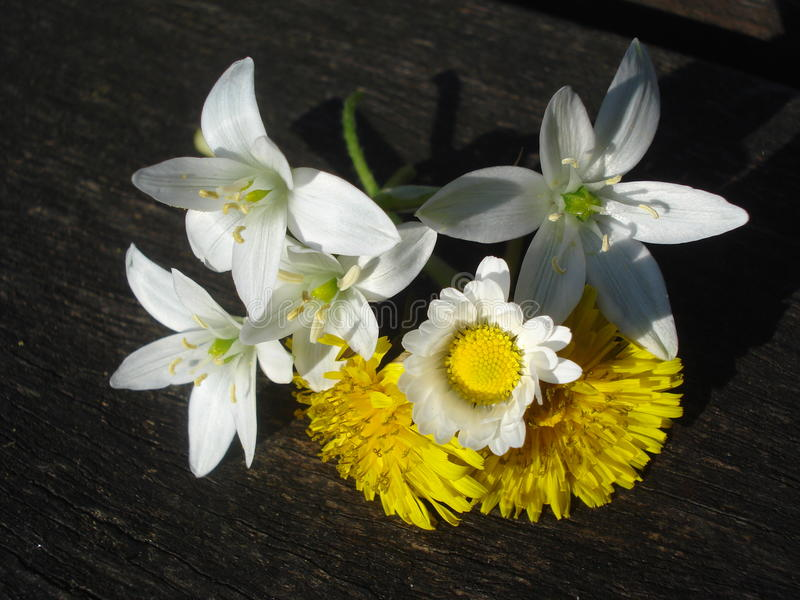 Spring wild flowers on wooden board. Star-of-Bethlehem, dandelions and bellis perennis flowers on a wooden batten royalty free stock photo