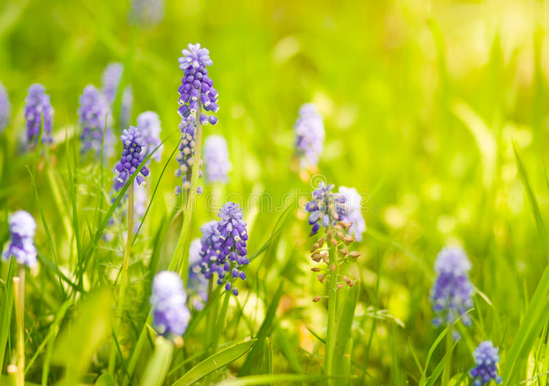 Spring wildflowers stock photo image of bloom fragrant 12703108 spring wildflowers mightylinksfo Image collections