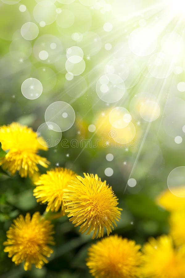 Spring Wildflowers Royalty Free Stock Images