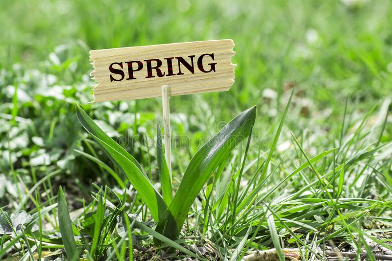 Spring wooden sign. Spring on wooden sign in garden with white spring flower stock photography