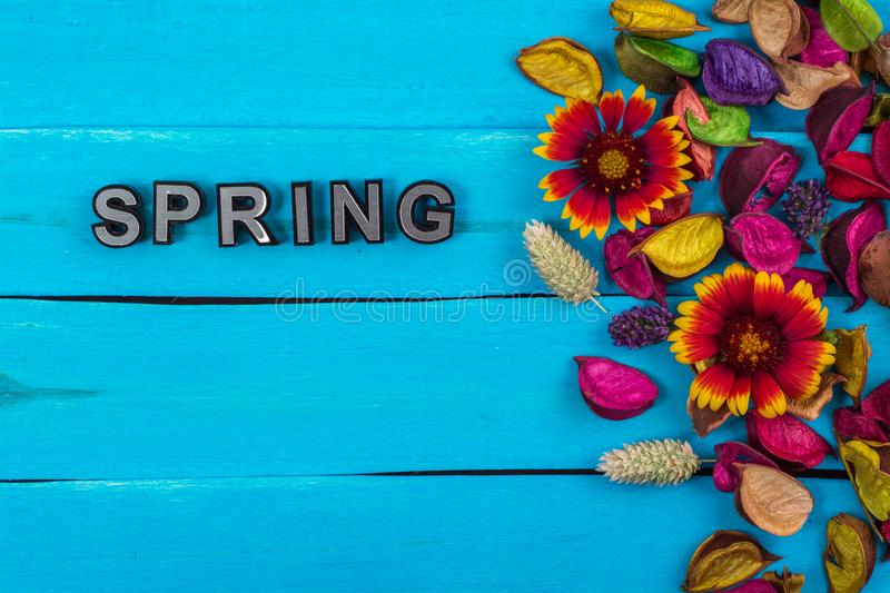 Spring word on blue wood with flower royalty free stock images