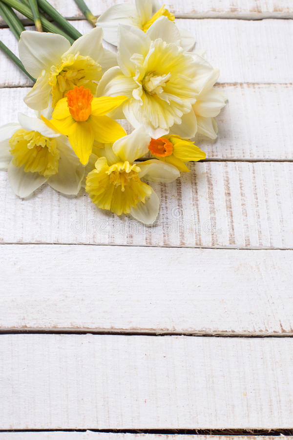 Spring yellow narcissus flowers on white painted wooden planks. Selective focus. Place for text royalty free stock photos