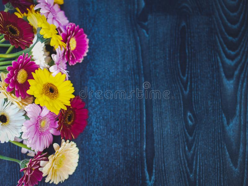 Spring yellow, pink and red gerbera flowers on blue wooden vintage background. Selective focus.Copy space and wide panoramic frame royalty free stock image