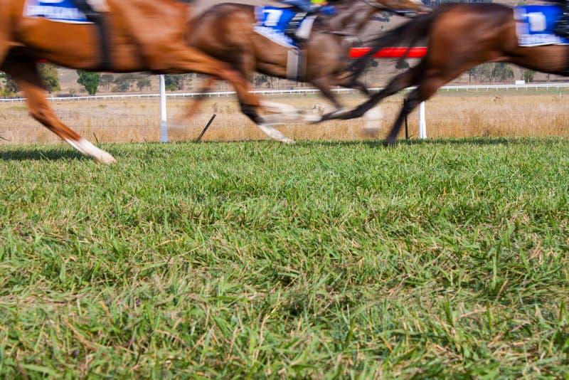 Springa för hästar på löparbanan arkivbild
