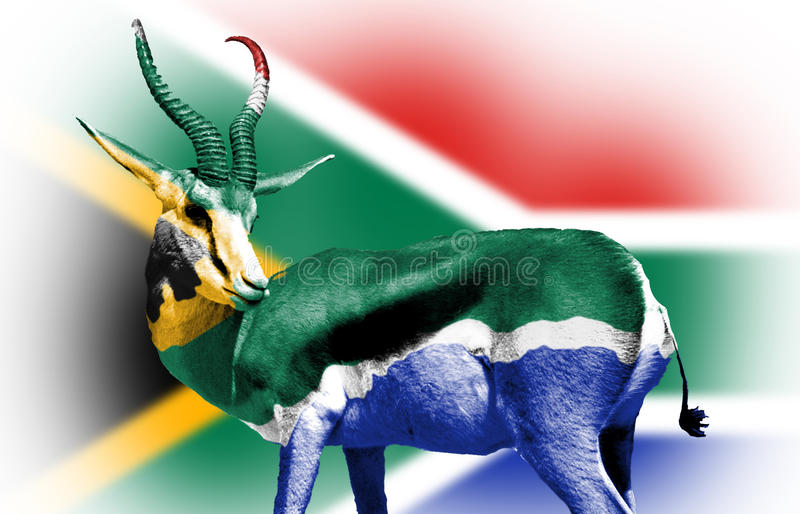 Springbock wrapped in South African Flag stock illustration