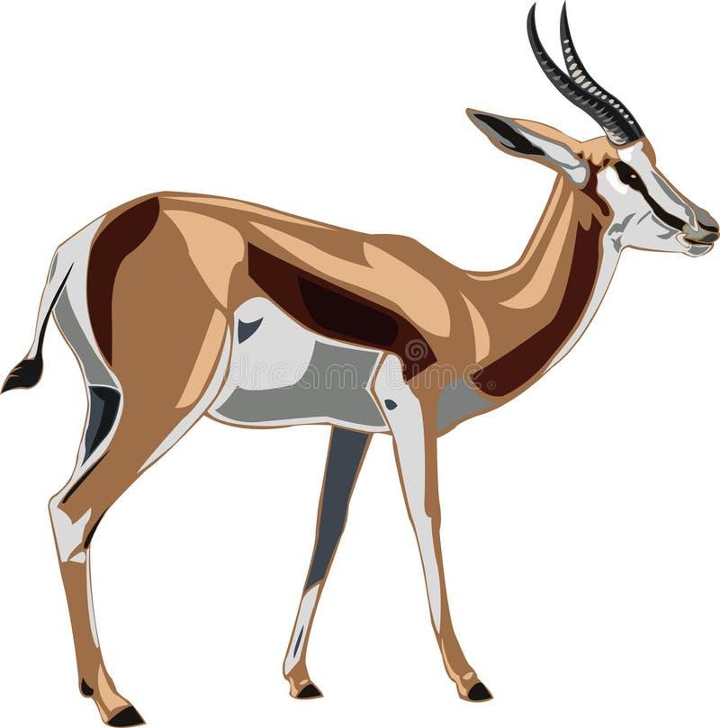 Springbok de série d'antilope illustration libre de droits