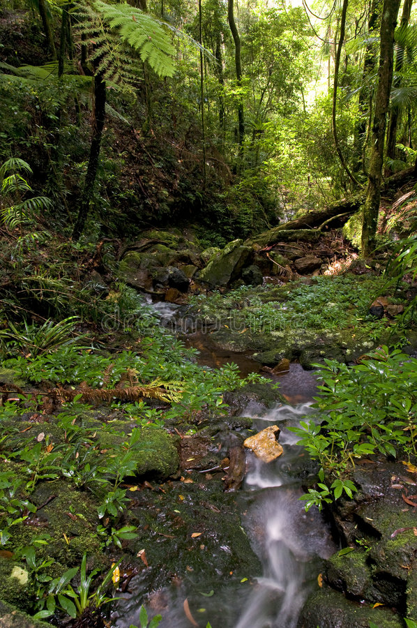 Download Springbrook National Park Royalty Free Stock Photography - Image: 8958307
