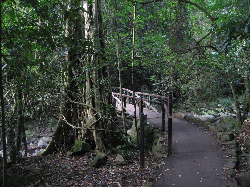 Springbrook nationalpark royaltyfria bilder