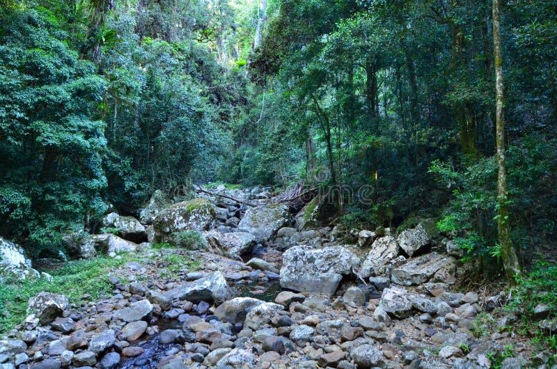 Springbrook nationalpark - Queensland Australien arkivfoto
