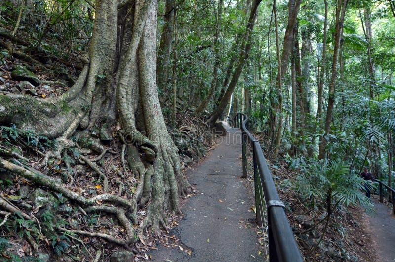 Springbrook nationalpark - Queensland Australien arkivfoton