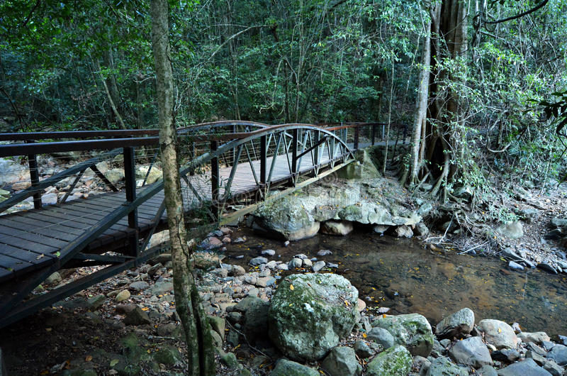 Springbrook nationalpark - Queensland Australien fotografering för bildbyråer