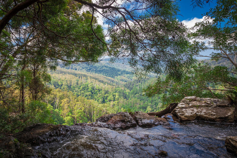 Springbrook park narodowy, Australia fotografia stock
