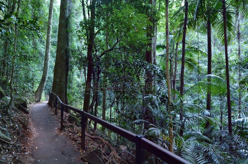 Springbrook park narodowy - Queensland Australia obrazy stock
