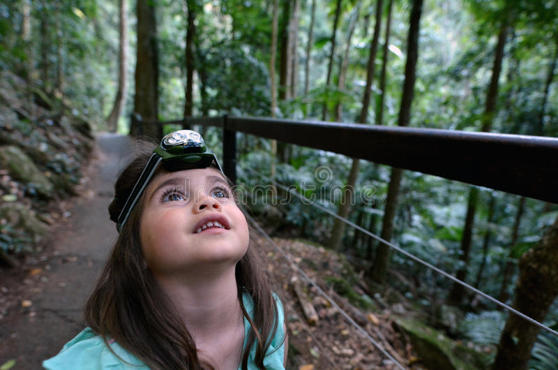 Springbrook park narodowy - Queensland Australia zdjęcie royalty free