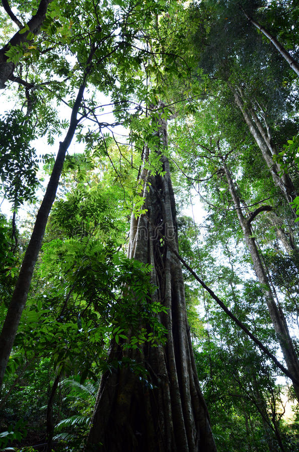 Springbrook park narodowy - Queensland Australia obraz stock